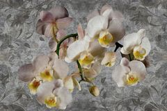 3d wallpaper, orchids flower on concrete wall textured background. The original panel will turn your room in with the most recent world trends in interior royalty free stock image