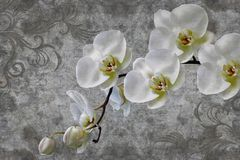 3d wallpaper, orchids flower on concrete wall textured background. stock photography
