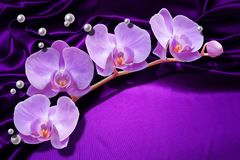 3d wallpaper, orchids and pearl on purple silk. 3d wallpaper, orchids and pearls on silk background. Flower theme - this is a trend in design. Celebration 3d stock image