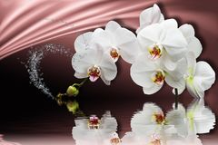 3d wallpaper, orchids reflected in water on silk background. Flower theme - this is a trend in design. Celebration 3d background royalty free stock images
