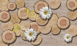 3d wallpaper, Tree Circle Texture and chamomiles, close-up. 3d wallpaper, chamomiles on wooden background. 3d background, tree circle texture and chamomiles royalty free stock photo