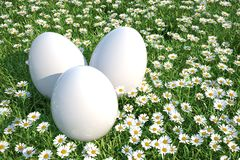 3d white easter eggs on floral meadow Royalty Free Stock Photos