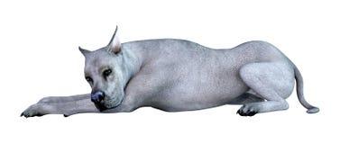 3D Wiedergabe blauer Grat Dane Dog auf Weiß stock abbildung
