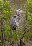 Dźwigowa Ptasia pozycja Fotografia Stock