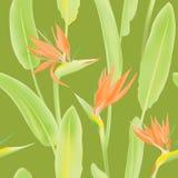 Dźwigowy kwiat lub ptak raj Obraz Stock