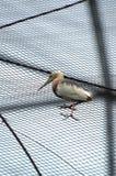 Dźwigowy ptak zdjęcia stock