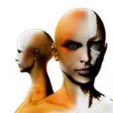 3D wireframe menselijk wijfje Stock Afbeelding