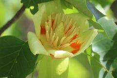 3d wysokiego ilustracyjnego postanowienia drzewny tulipanowy biel Zdjęcia Royalty Free