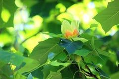 3d wysokiego ilustracyjnego postanowienia drzewny tulipanowy biel Fotografia Royalty Free