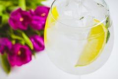 Dżin z cytryna plasterkiem i lód w wina szkle Zdjęcia Royalty Free