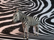 3d Zebra with same texture Royalty Free Stock Photos