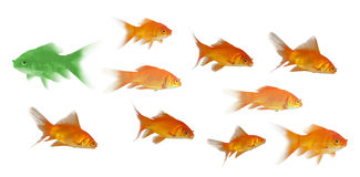 3D zijaanzicht van vissen het zwemmen Stock Afbeeldingen