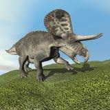 3D Zuniceratopsdinosaurus - geef terug Stock Fotografie