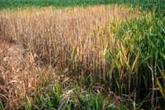 Daño ambiental de la cosecha Imagenes de archivo