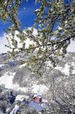 Daño de la nieve de la primavera Imagen de archivo libre de regalías