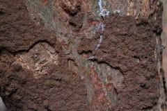 Daño de la termita imágenes de archivo libres de regalías