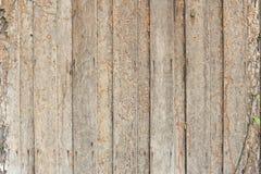 Daño de la termita imagen de archivo libre de regalías