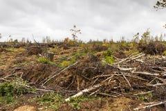 Daño de la tormenta árboles en el bosque después de una tormenta Imagenes de archivo