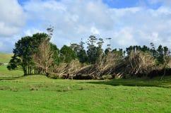 Daño de la tormenta del fuerte viento Imagen de archivo