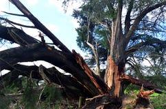 Daño de la tormenta del fuerte viento fotos de archivo