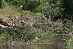 Daño de la tormenta del viento Fotografía de archivo