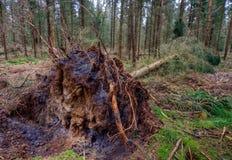 Daño de la tormenta en un bosque Foto de archivo libre de regalías