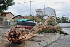Daño de la tormenta - Windthrow foto de archivo