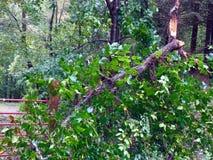 Daño del huracán Foto de archivo