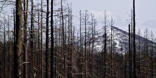 Daño del incendio forestal en yellowstone Imagen de archivo