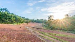 Da拉特, Lam Dong,越南2017年2月12日:da拉特城市, pinkgrass beautyful风景在杉木小山,草bbloo调遣 免版税图库摄影