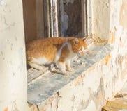 Da casa velha vai o gato abandonado sujo do gengibre imagens de stock royalty free
