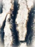 Da casca da textura fim acima Imagem de Stock