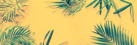 Da configuração tropical do plano das folhas de palmeira das variações opinião superior foto de stock