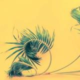 Da configuração tropical do plano das folhas de palmeira das variações opinião superior fotografia de stock