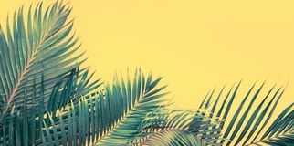 Da configuração tropical do plano das folhas de palmeira das variações opinião superior fotografia de stock royalty free