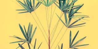 Da configuração tropical do plano das folhas de palmeira das variações opinião superior imagens de stock royalty free