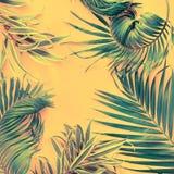 Da configuração tropical do plano das folhas de palmeira das variações opinião superior imagem de stock