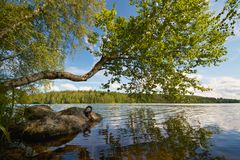 Día de verano en un lago Imagenes de archivo