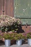 Da flor vida ainda no pasto Fotos de Stock