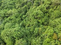 Da floresta morna da luz do sol do verão opinião aérea Foto de Stock