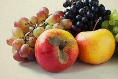 Da fruto el tiempo de cosecha Uvas (violetas) de las manzanas, del rojo, verdes y púrpuras Foto de archivo