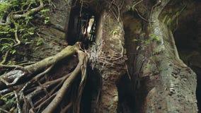 Da inclinação ruínas para baixo do forte velho Karang Bolong video estoque