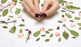 Da la hembra con las rosas en un fondo de pétalos, de flores y de l Imágenes de archivo libres de regalías