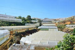 DA LAT CITY, VIETNAM - January 23, 2015: nobody, greenhouses in the vicinity of Da Lat Stock Images