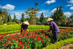 Da Lat flower garden Stock Photos