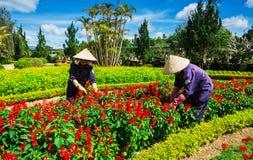 Da Lat flower garden Stock Image