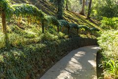Walkways in Da Lat national park in Da Lat, Vietnam royalty free stock photo