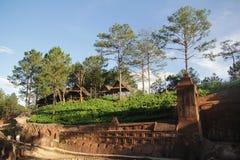 Da-lat, Vietnam - November 24,2016: Härlig landscate med trädet på berget arkivfoto