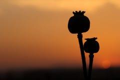 ` Da mãe e do filho do ` que olha o por do sol Imagem de Stock
