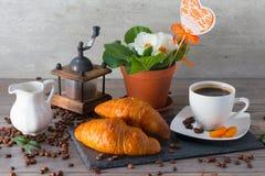 Da manhã conceito da vida ainda Moedor de café, croissant dois, café do aroma e flores amanteigados da prímula no fundo de madeir Imagens de Stock Royalty Free